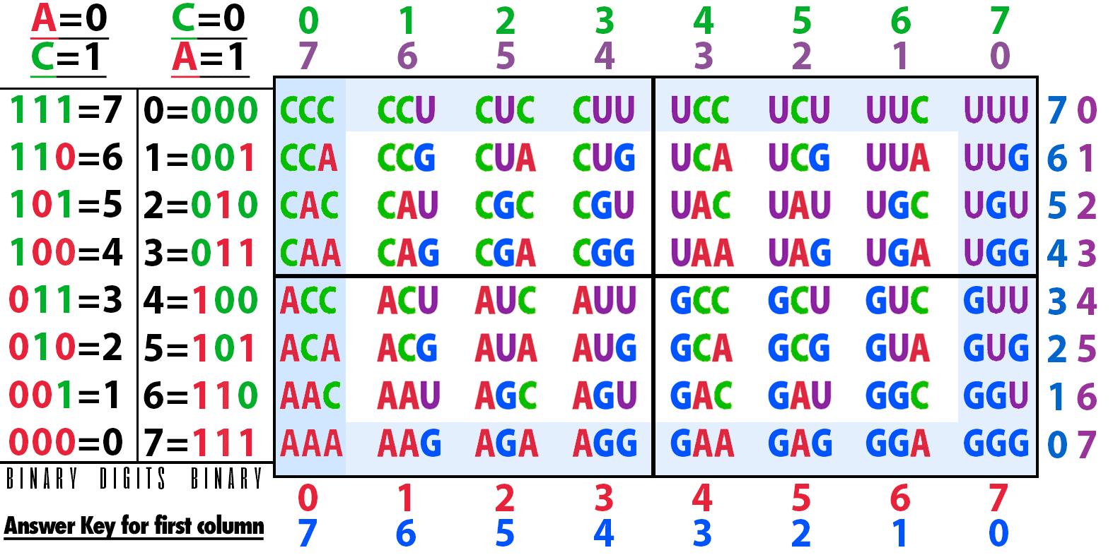 9-RNA-puzzle